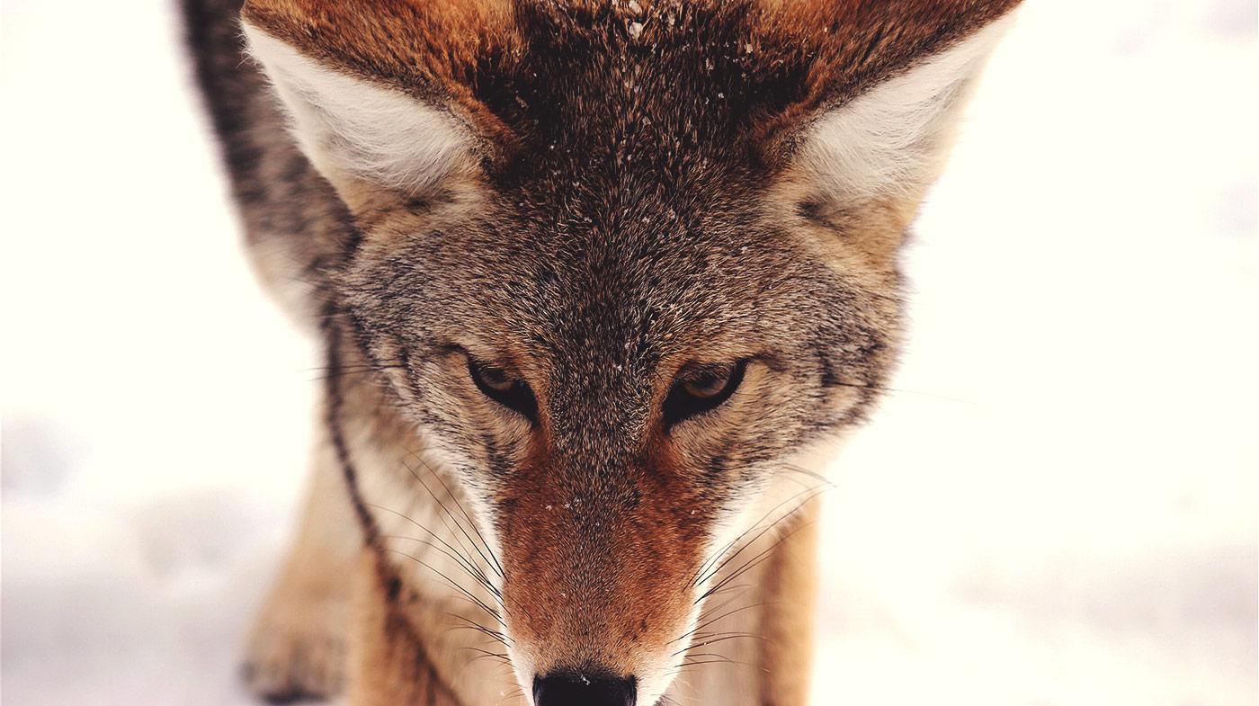 Причины раздражения и агрессии: временные и хронические факторы
